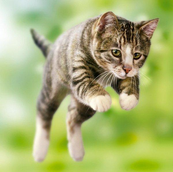 best non dust cat litter