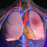 Тромбоэмболия легочной артерии клиника