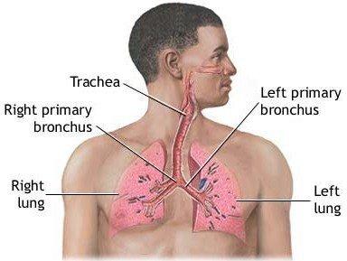 паразиты в легких человека фото