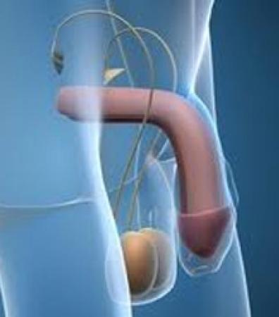Фото виды половых органов человека фото 758-511
