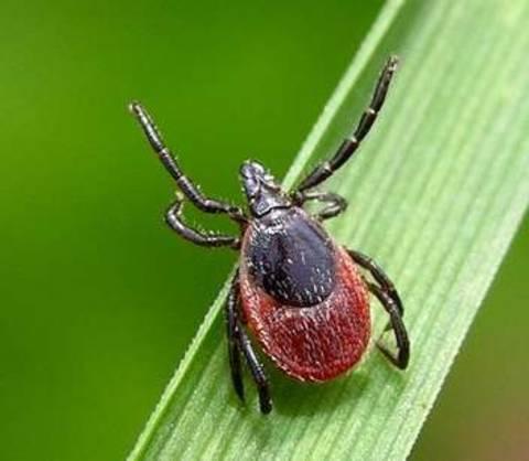 как защититься от паразитов в организме