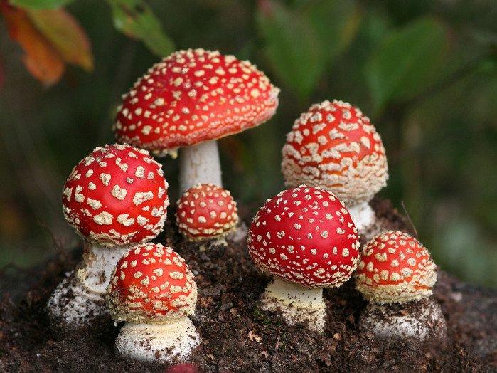 В Гомеле зафиксирован смертельный случай отравления грибами